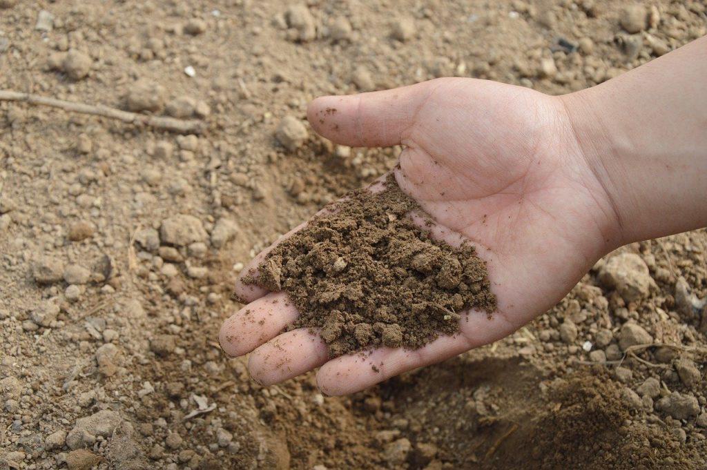 cenere come fertilizzante per piante
