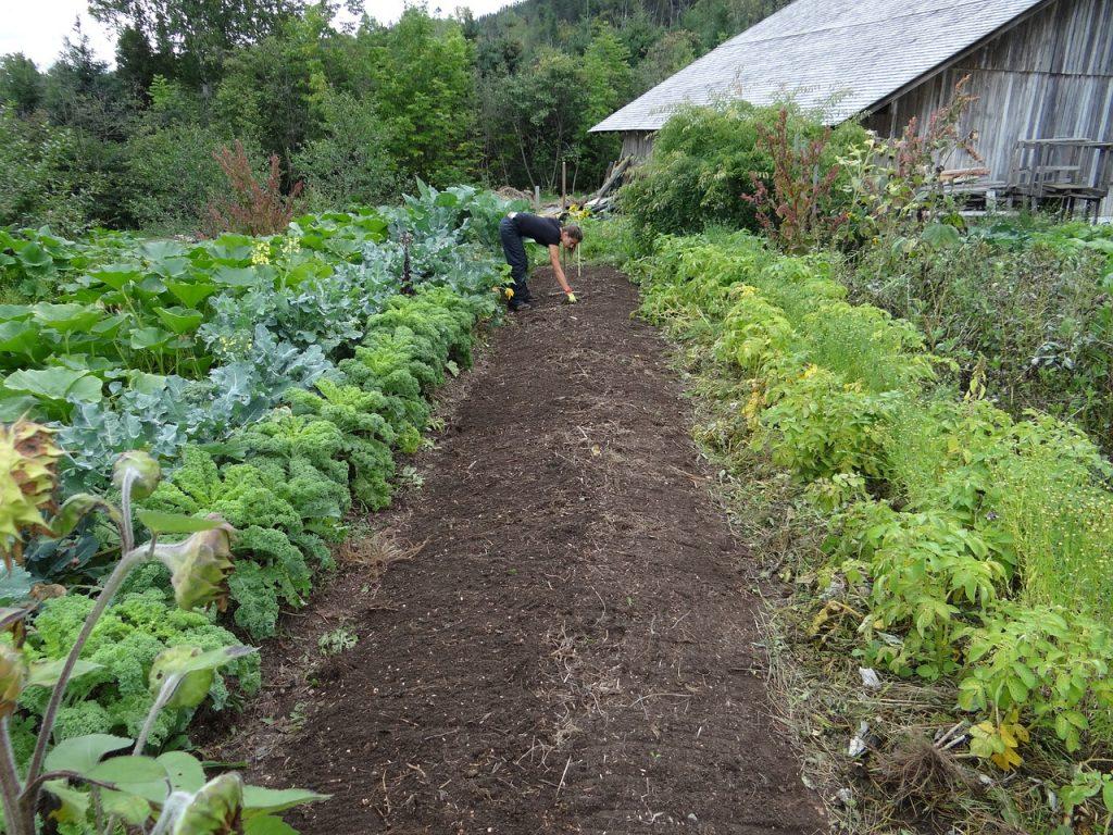 cosa piantare mese per mese nell'orto