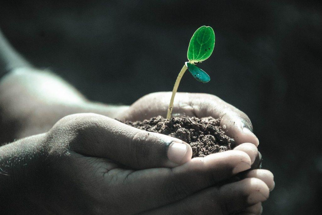 fertilizzante per le piante
