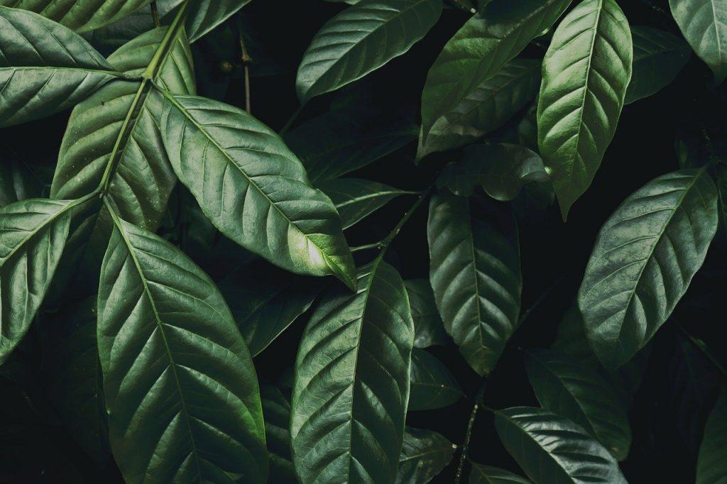 foglie piante