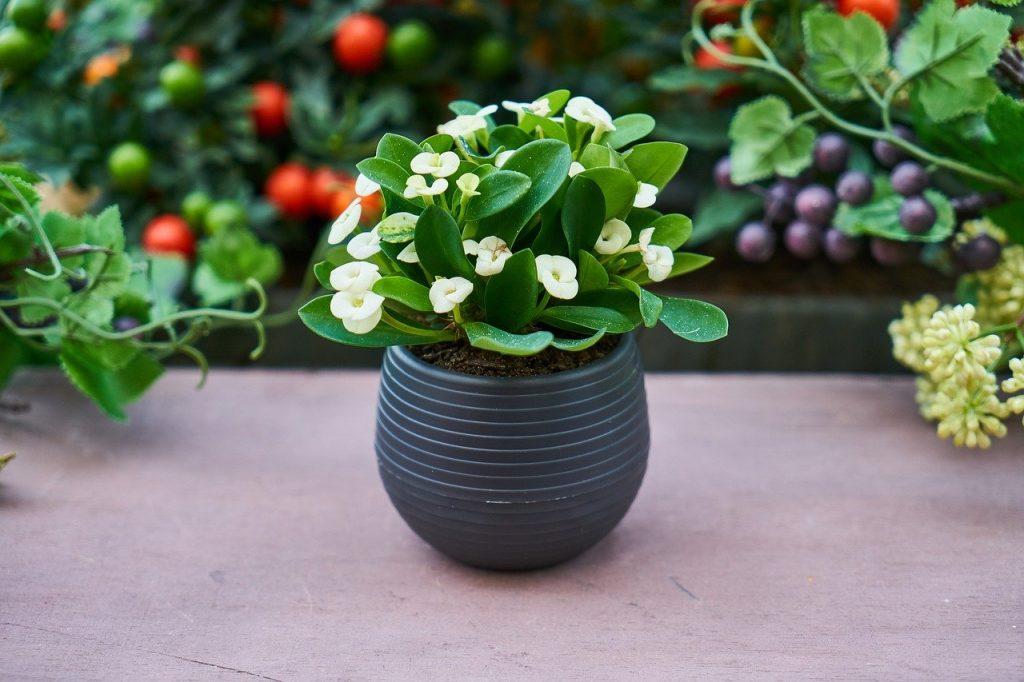 pianta piccola