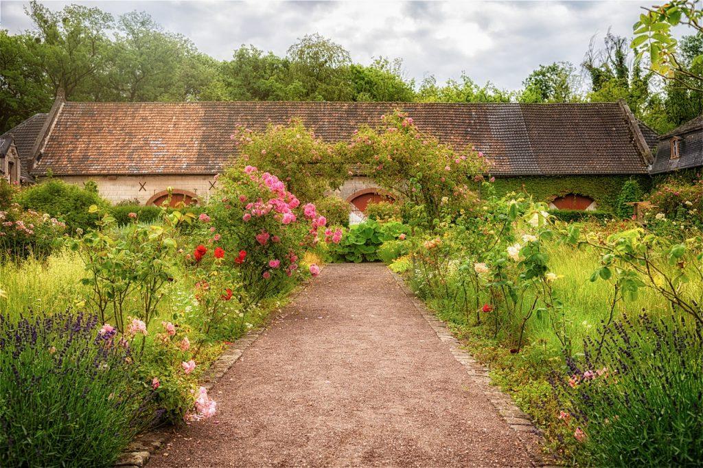 roseto nel giardino