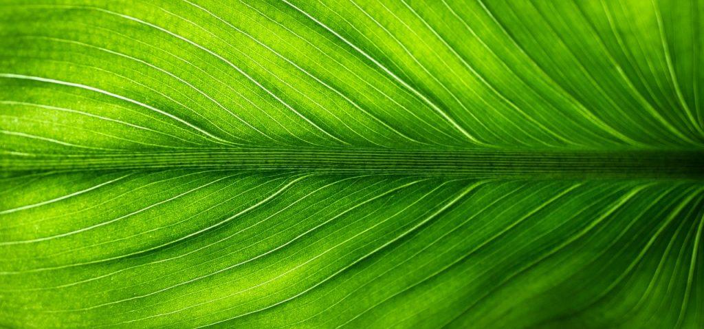 classificazione piante