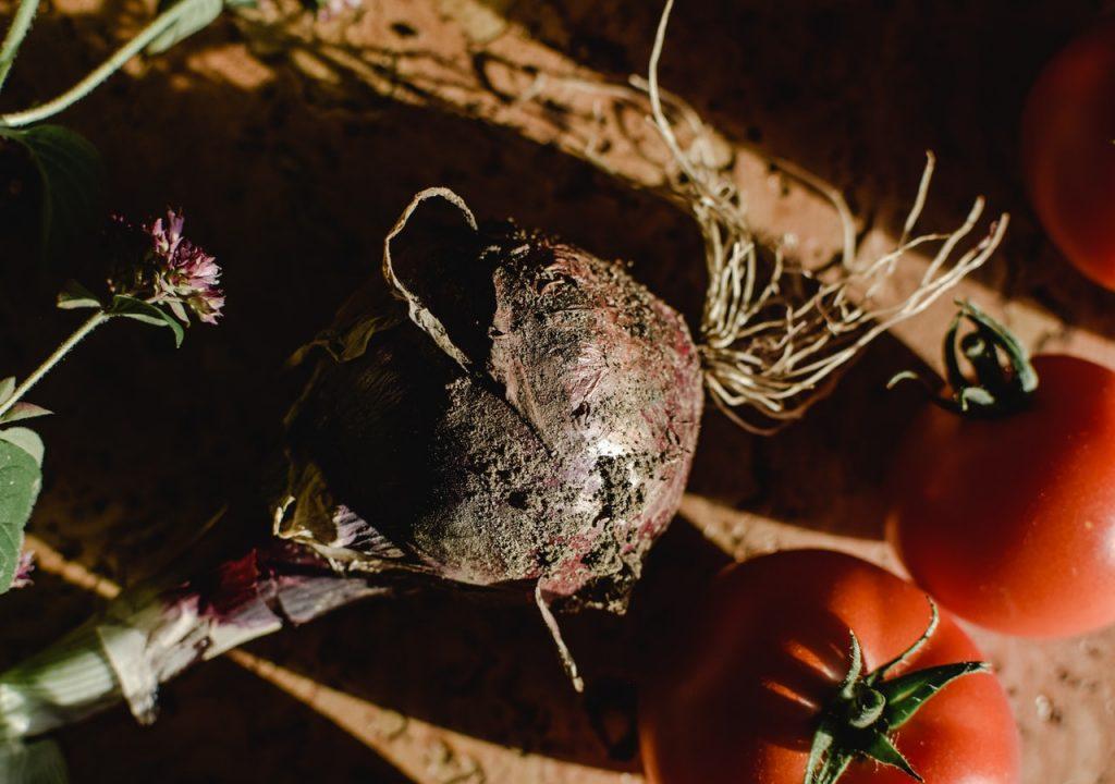 Bulbo di una cipolla