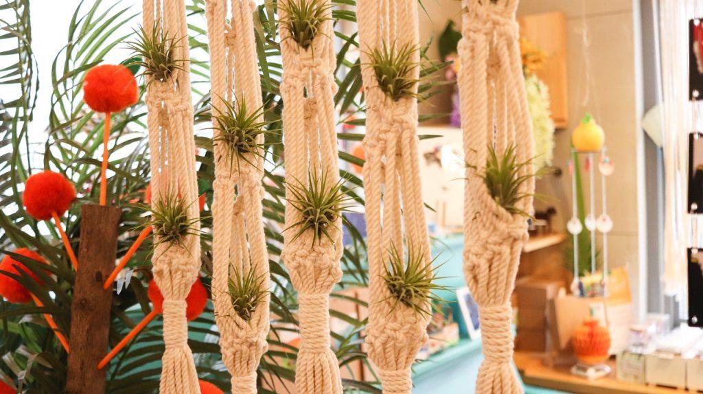 Tillandsia decorative
