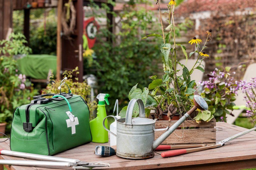 curare piante malate