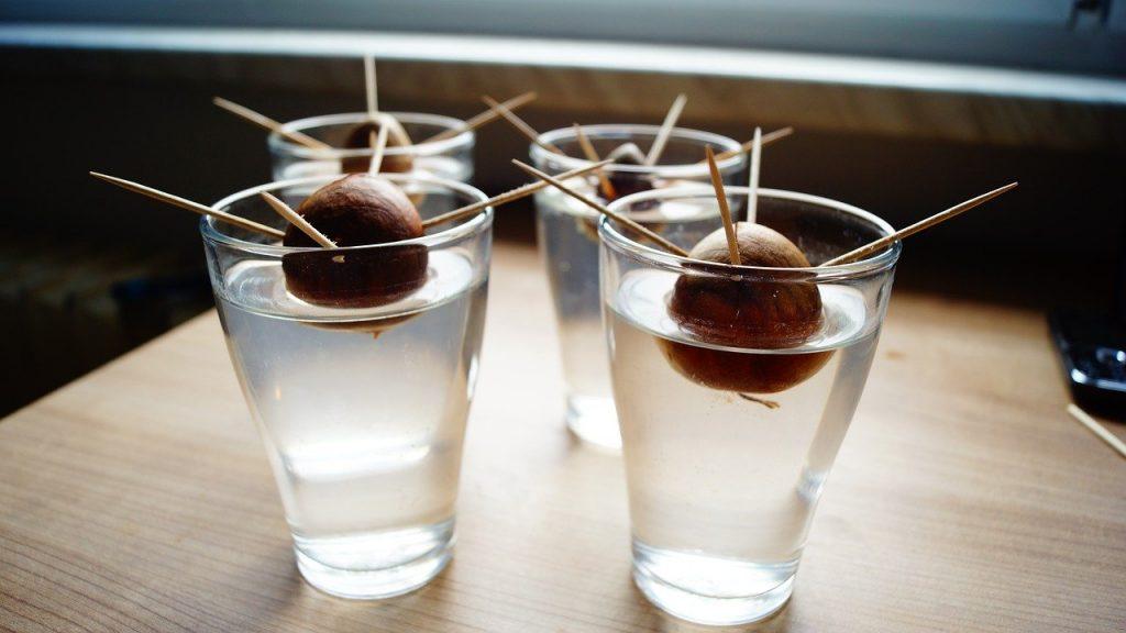 semi di avocado con stuzzicadenti