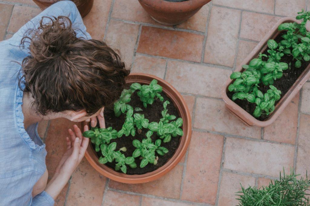 Pianta di basilico appena piantato